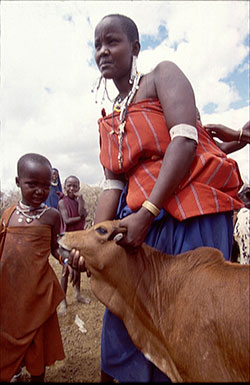 Masai woman with cattle